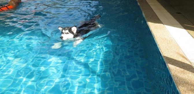 Review สระว่ายน้ำหมา Doggie Doo เย็นอากาศ-พระราม3