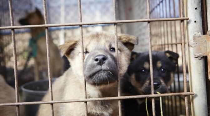 จะซื้อลูกหมา แต่กลัวถูกหลอก กลัวได้หมาจากฟาร์มนรกที่ทารุณสัตว์ จะมีวิธีเลือกอย่างไร